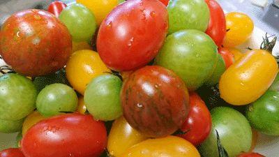 I Love Tomato