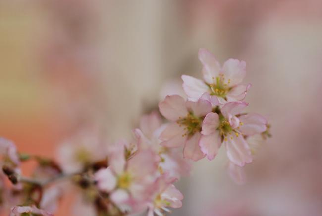 春、遠からず