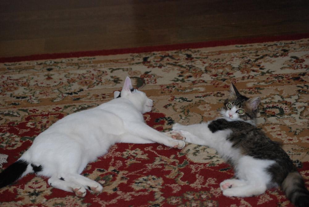 猫3匹の生活