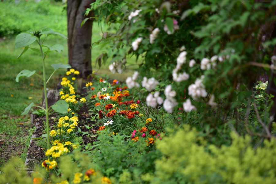 花茶原生花園