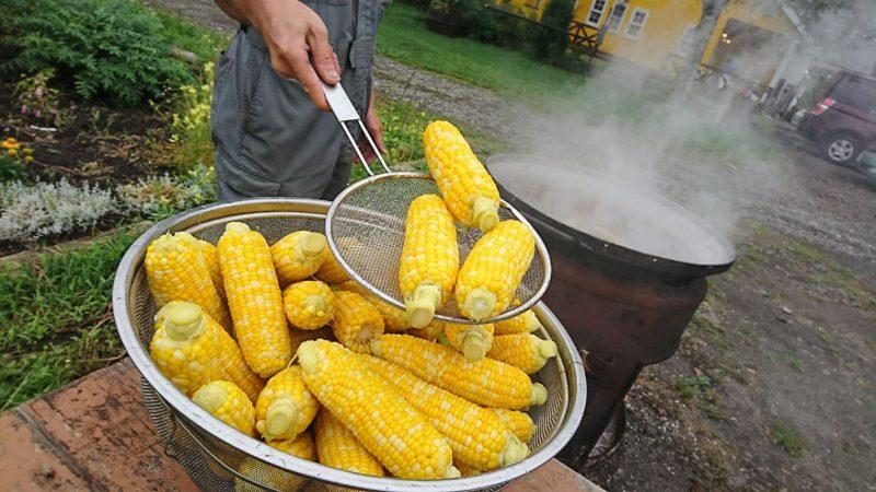 釜茹でトウモロコシ、始まっています。