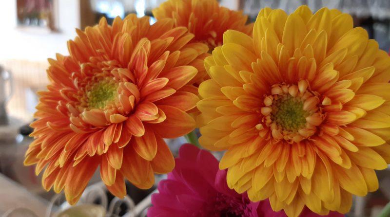 この花のように