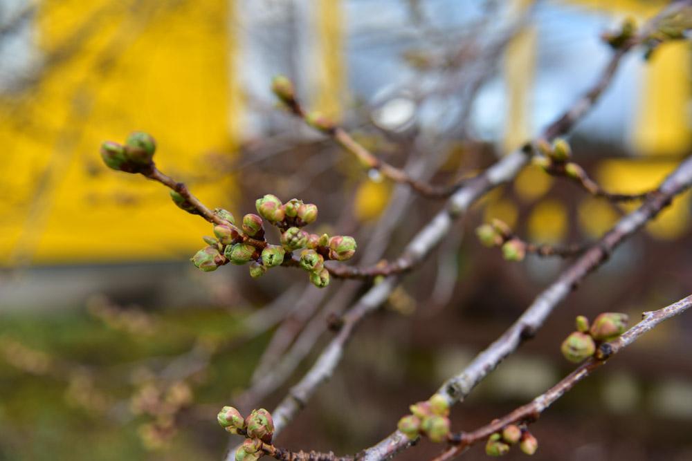 きびしい春だけど