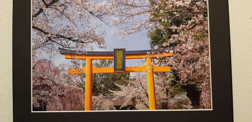 桜が、春が待ち遠しくて